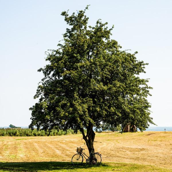 geparkeerde fiets tegen eenzame boom midden in veld