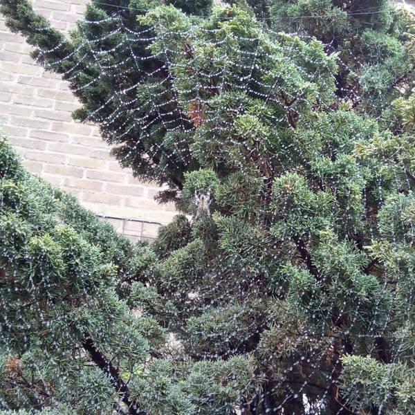 close-up van spinnenweb met bomen op achtergrond